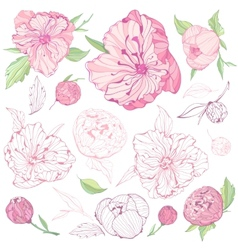Set of isolated peony flowers vector