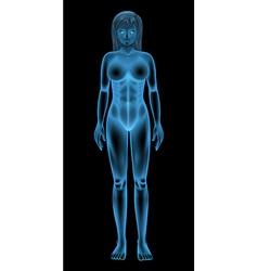 Female body vector