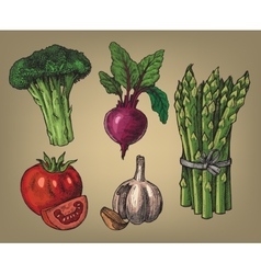 Hand drawn of vegetables vector