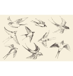 Swallows flying bird  hand drawn sketch vector