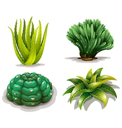 Aloe vera plants and cacti vector