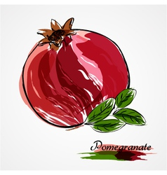 Pomegranate vector