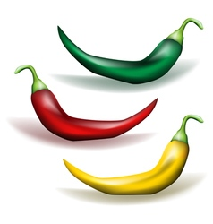 Chili pepper vector