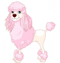 Pink poodle vector