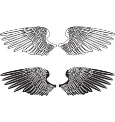Spread wings vector