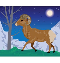 Wild ram in the mountains4 vector