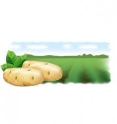 Potato field landscape vector