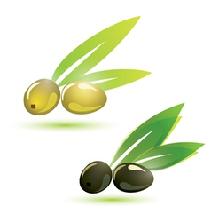 Olives natural vector