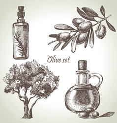 Hand drawn olive set vector