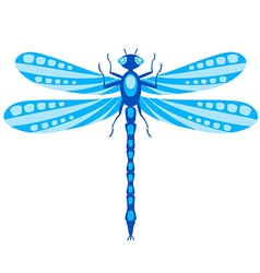 Dragonfly isolated on white vector