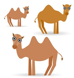 Funny camel on white background vector