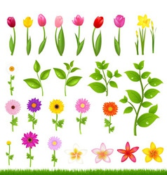 Flowers and grass vector