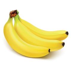 Ripe bananas vector