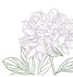 Peonies pink and green line art vector