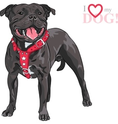 Sketch dog staffordshire bull terrier breed vector
