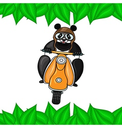 Panda in helmet goes on scooter in leaves frame vector