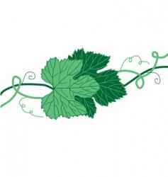 Grape leaves vector