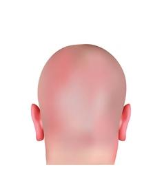 Realistic bald head vector