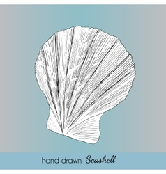 Hand drawn marine seashell vector