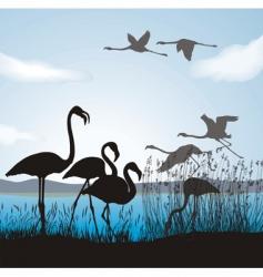 Flamingo on lake vector