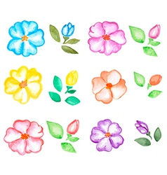 Set of watercolor flowers and leaves vector