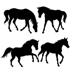 Silhouettes of horses - vector