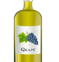 Grape vector