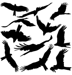 Set black silhouettes of prey eagles on white vector