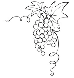 Graphic design - grapevine vector