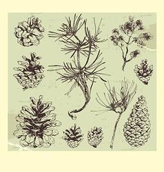 Pine tree vector