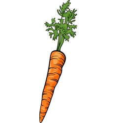 Carrot root vegetable cartoon vector