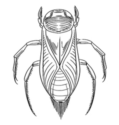 Water boatman vector