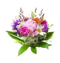 Colorful flowers bouquet isolated on white vector
