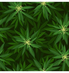 Blooming cannabis seamless pattern vector