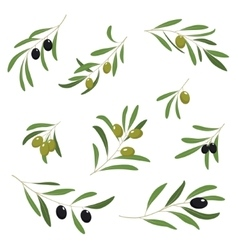 With green and black olives vector