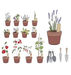 Flower pots with herbs and vegetables gardening vector