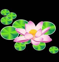 Water lily or lotus flower vector