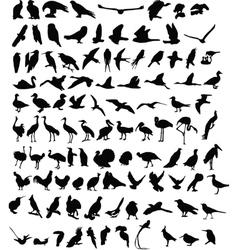 100 birds vector