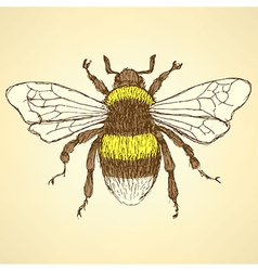 Sketch bumble bee in vintage style vector