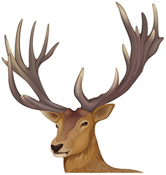 A male deer vector