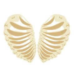 Heart shaped rib cage vector