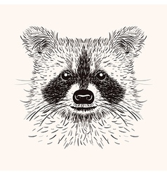 Sketch liner raccoon hand drawn in doodle style vector