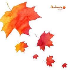 Watercolor painted orange maple leaves fall vector