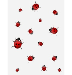 Ladybirds vector