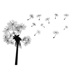 Dandelion flying background vector