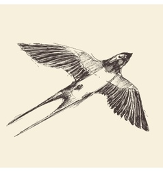 Swallow bird engraved  sketch vector