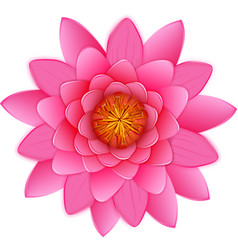 Beautiful pink lotus or waterlily flower isolated vector