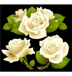 White roses set vector