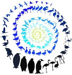 Birds in spiral vector