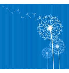 Dandelion on blue vector